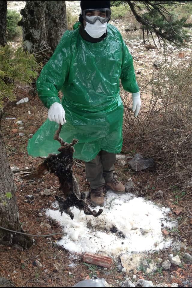 Η Συμβολή των Κυνηγετικών Οργανώσεων στο πρόγραμμα Επιτήρησης της Λύσσας στην Ελλάδα
